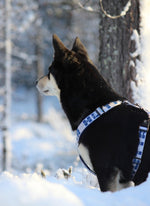 Go Finland! Padded Y-Harness