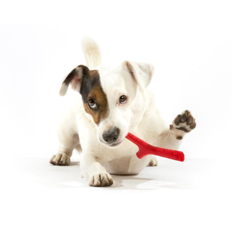 PLAYSTICK FOR DOGS TUTTOMIO