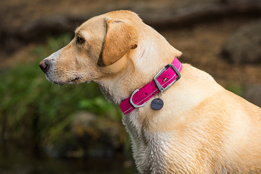 HEADWATER™ COLLAR