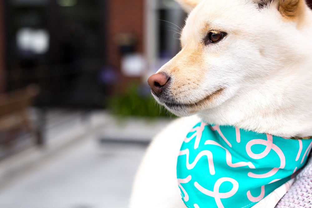 Reversible Bandana Collar / Teal Squiggly