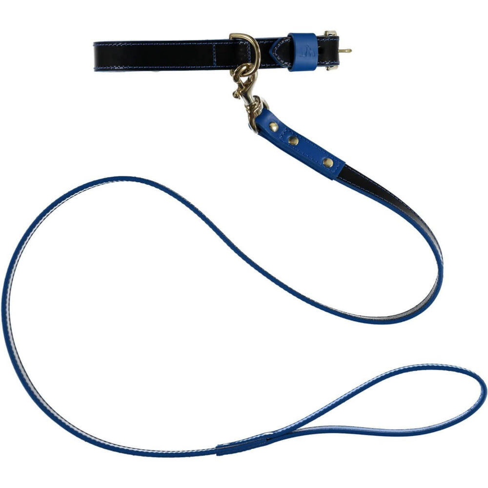 Pimlico Dog Lead Black/Blue