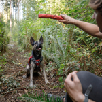 Gnawt-a-Stick™ Rubber Dog Toy