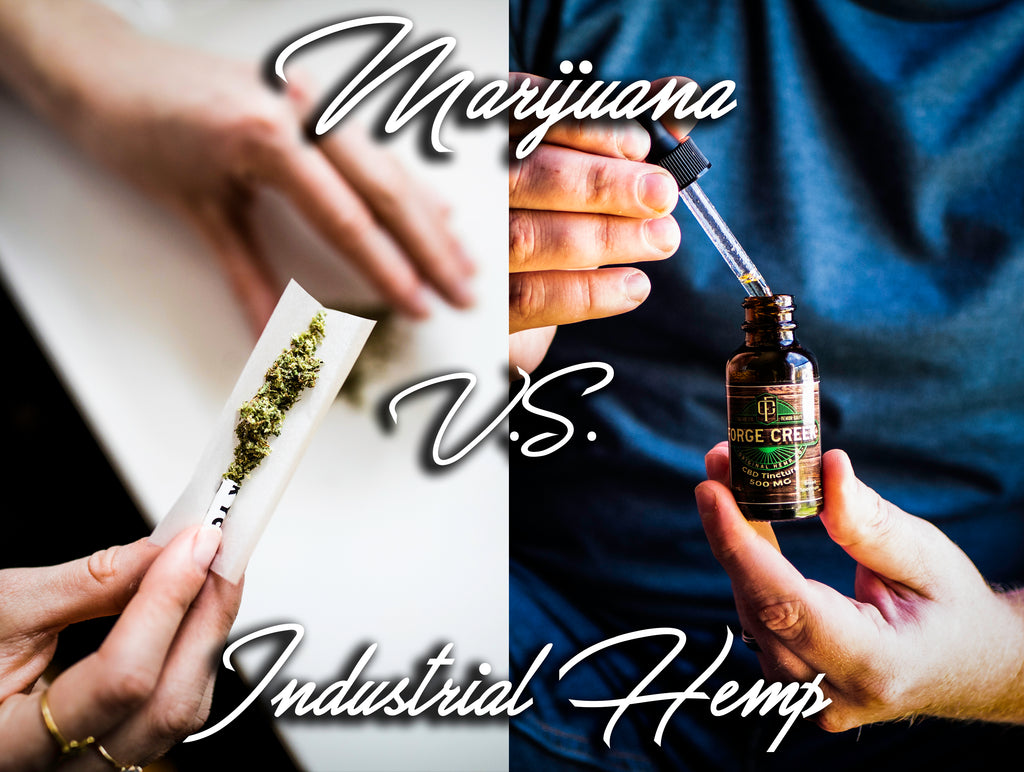 Marijuana v.s. Industrial Hemp: What is the Difference?