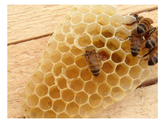 beeswax with bees crawling on top
