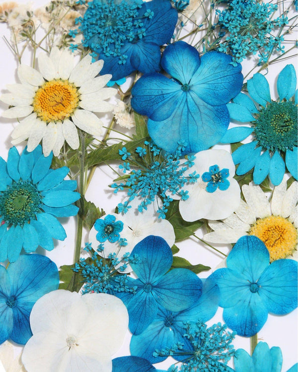 Blue Pressed Flowers