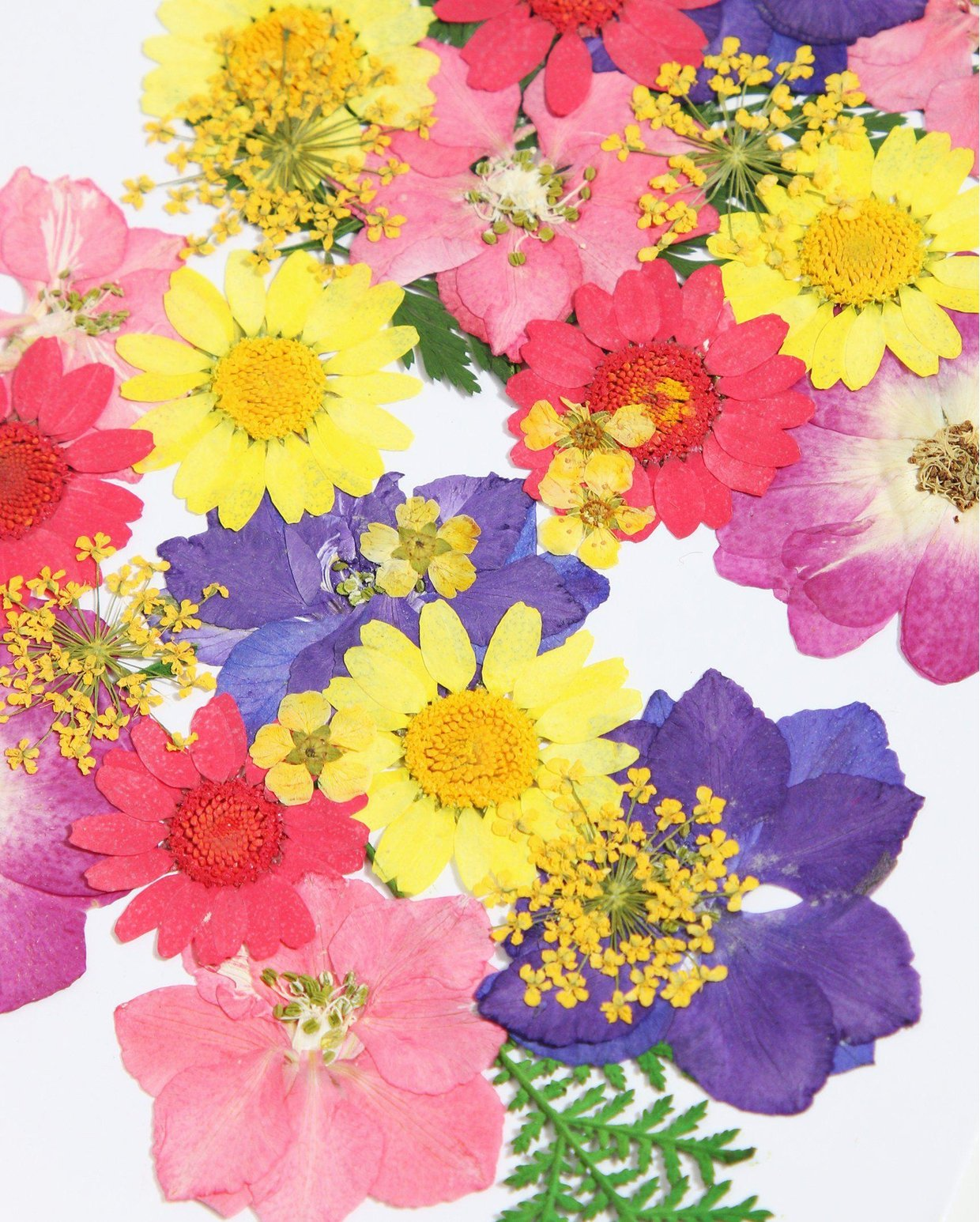 Mixed Pressed Flowers