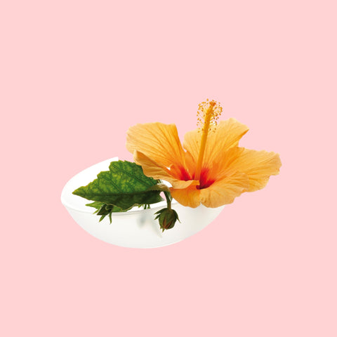 Hibiscus infused hair oil promotes growth
