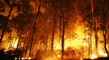 Supporting the Australian Bushfire Crisis