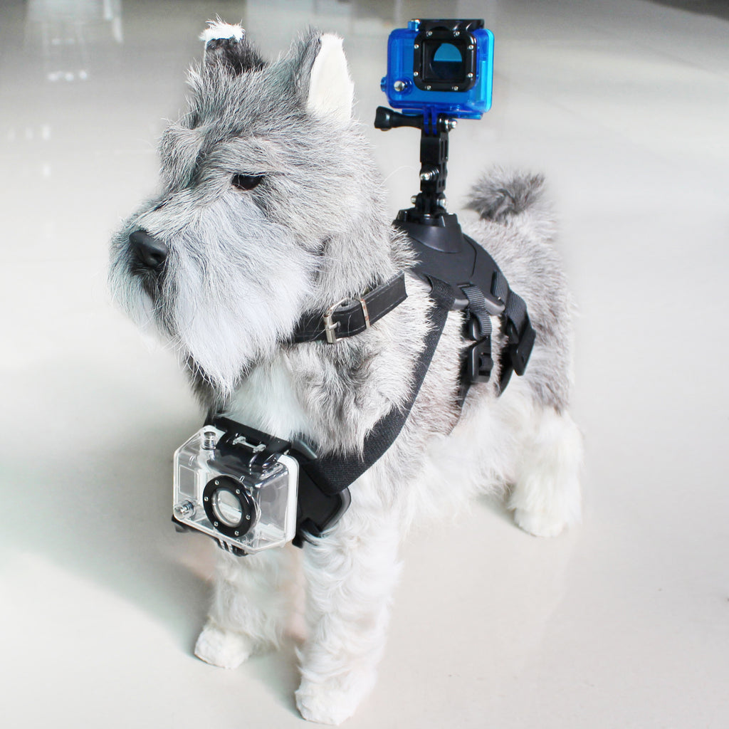 Pet Harness with Support for Sports Camera Black