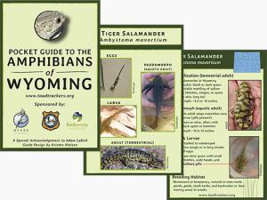 Wyoming Amphibian Identification Guide -Tax Free for State and Tax Exempt Organizations Only