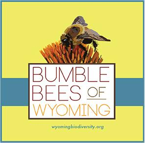 Bumble Bees of Wyoming