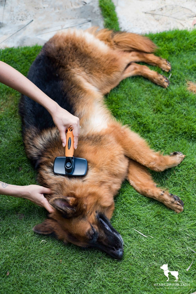 dog grooming for summer