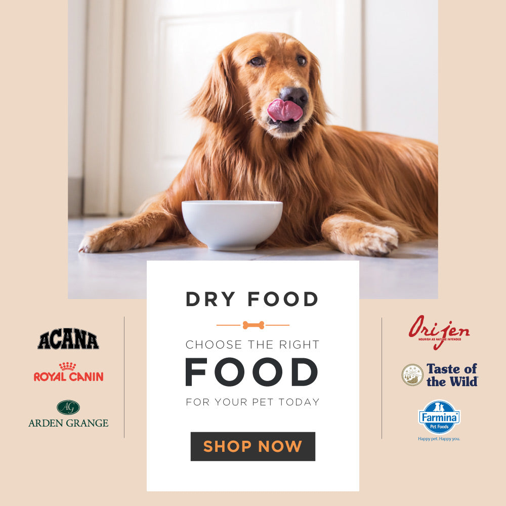 Buy Pet Supplies Online in India | Dog & Cat Products Online