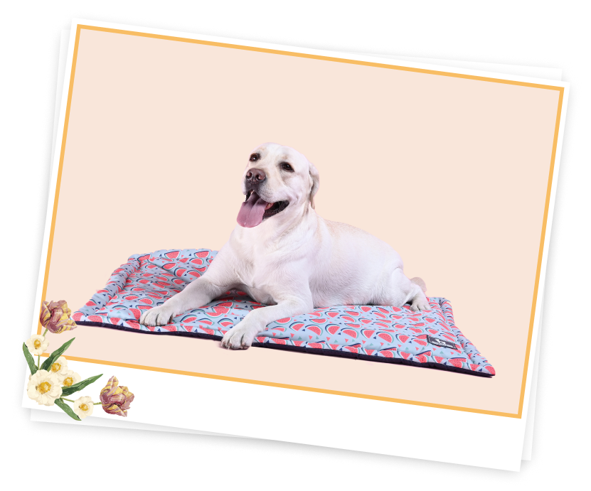 Sleeping Mats For Dogs