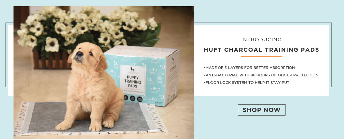 Buy Pet Supplies Online in India   Dog & Cat Products Online
