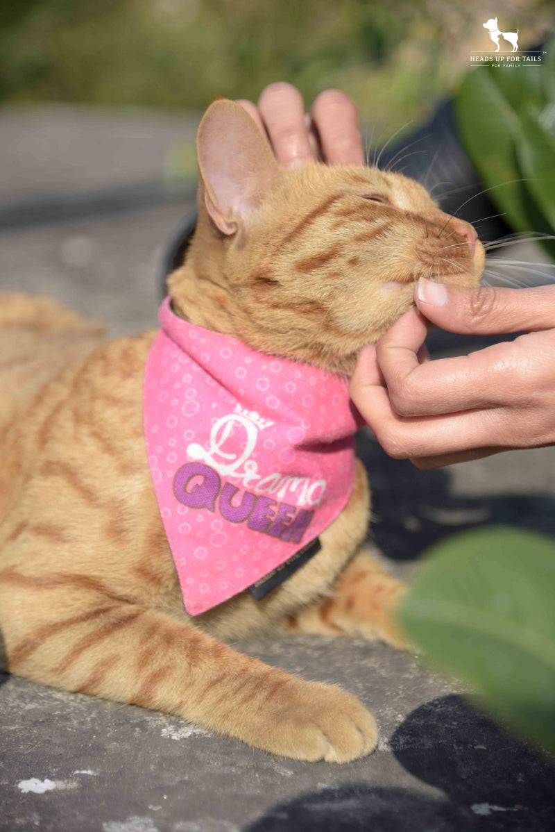 Brown cat with Bandana