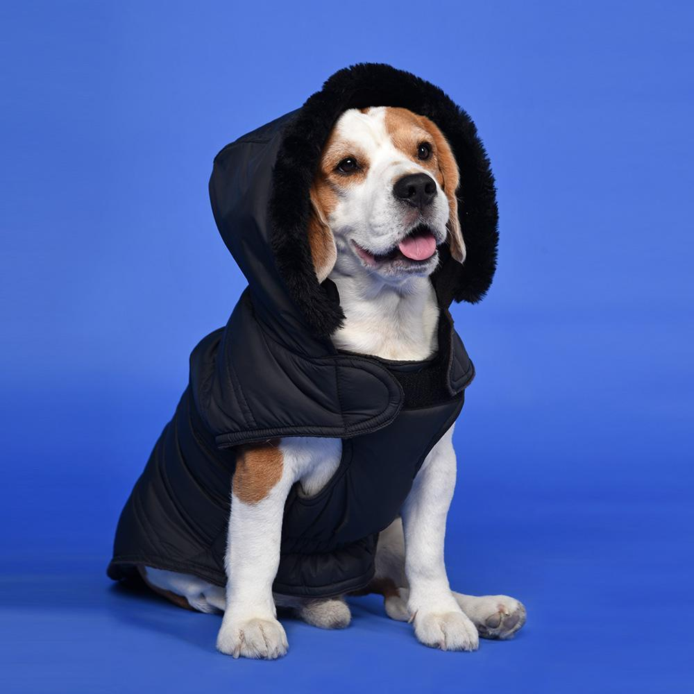 HUFT Bomber Black Hoodies Dog Jacket