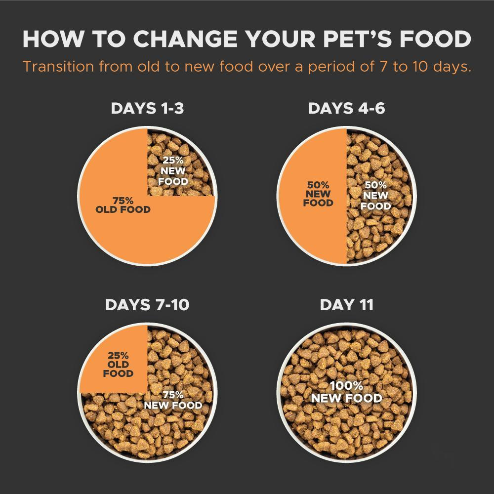 Steps To Change Your Pet's Food