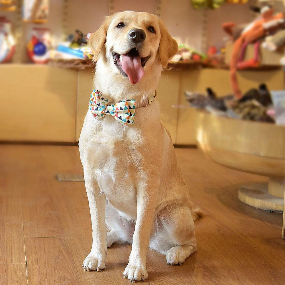 HUFT Prism Detachable Bow Tie for Dogs