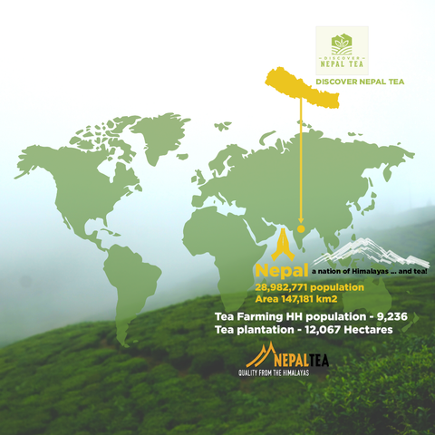 Discover Nepal Tea - A global network to promote small farmer's premium teas