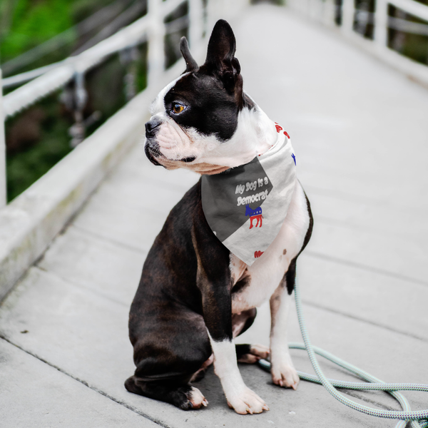 democratic dog, frenchie photos, republican, bandana, presidential candidates, president, Democrats are fighting for a better, fairer, and brighter future