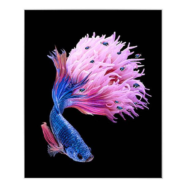 Silver Picture Frame Hyperealism Art Cyan and Magenta Siamese Fighting Fish