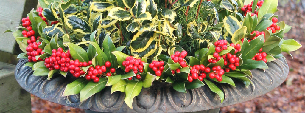 Getting Festive With Your Garden