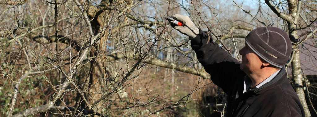 Nigel's Fruit Tree Pruning Tips