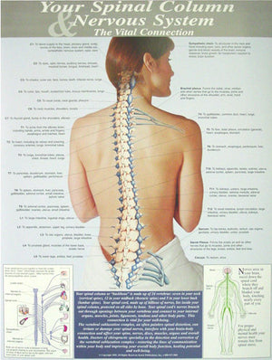 Your Spinal Column & Nervous System Poster - P10