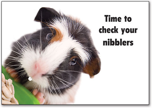 Check Your Nibblers Postcard