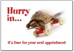 Hurry In Turtle Postcard