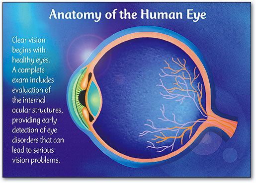 Anatomy/Eye Postcard