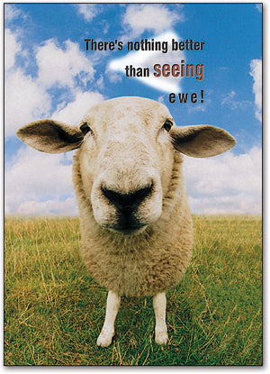 Seeing Ewe Postcard