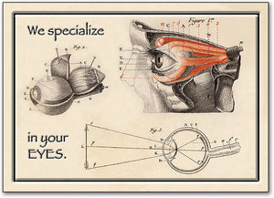 Eye Anatomy Postcard