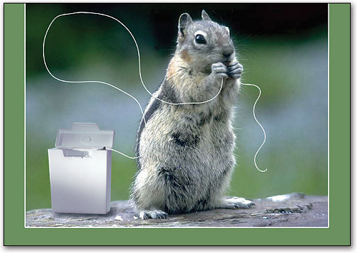 Flossing Squirrel Postcard