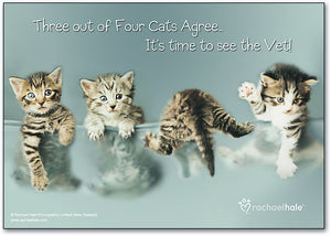 Cats Agree Postcard