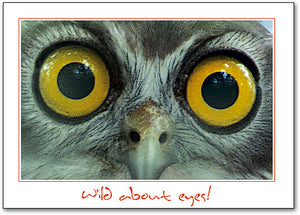 Big Owl Eyes Postcard