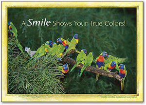 Colorful Birds Deluxe Postcard