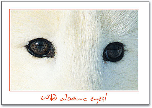 Fox Eyes Postcard