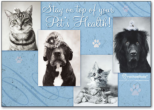 Stay On Top Of Pets Deluxe Postcard