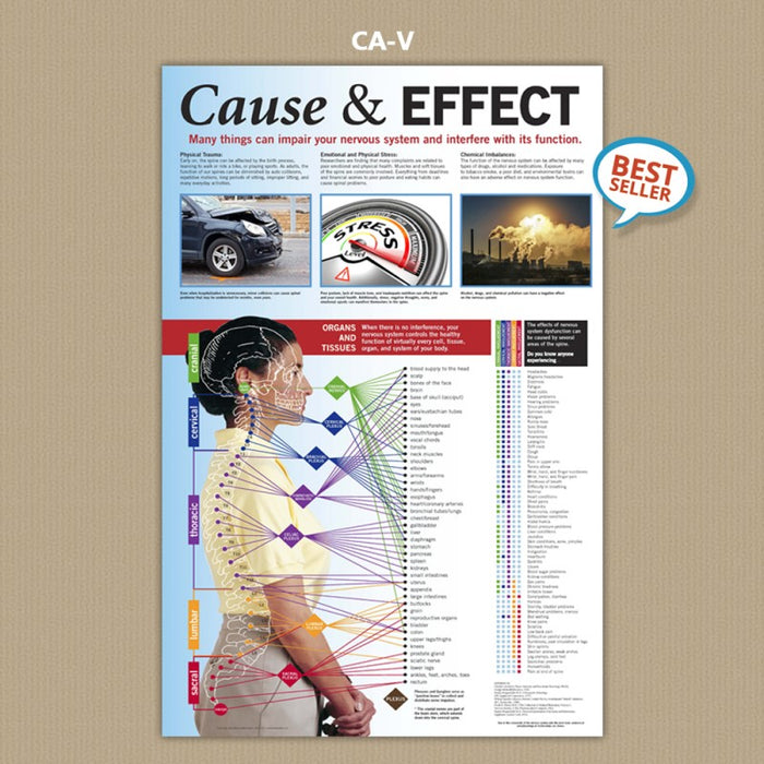 Cause & Effect 24 x 36 -  (Laminated)