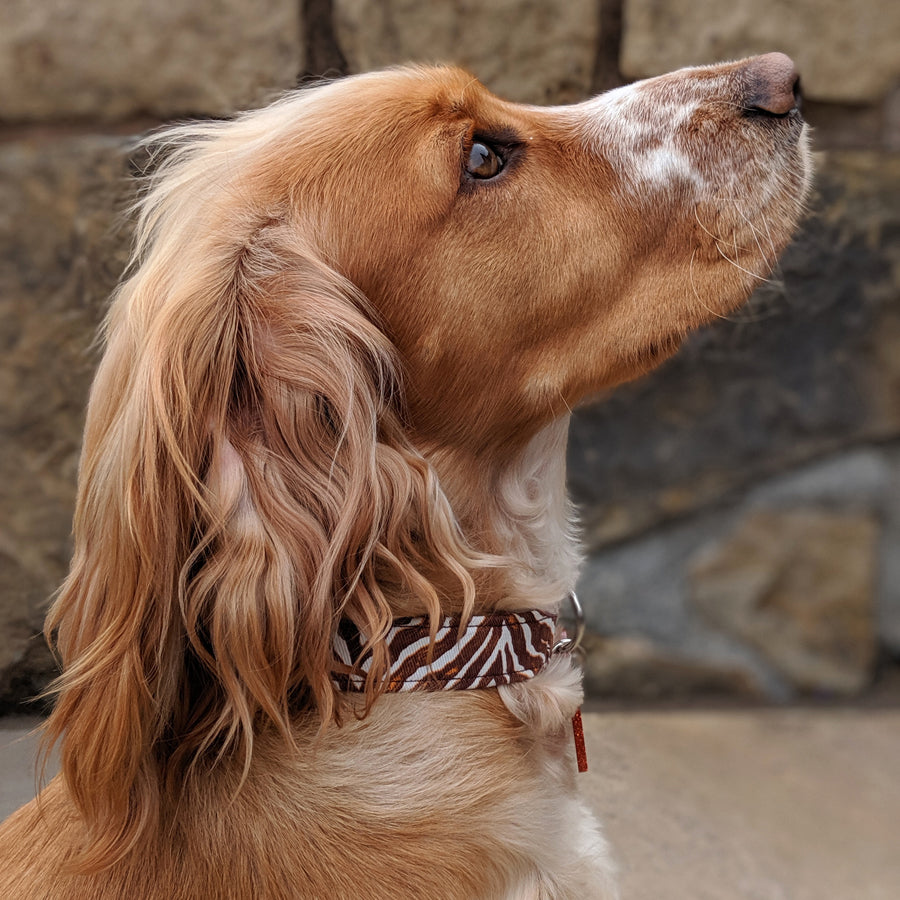 Wren & Rye - Animal Stripe Print Collar - Dog Model