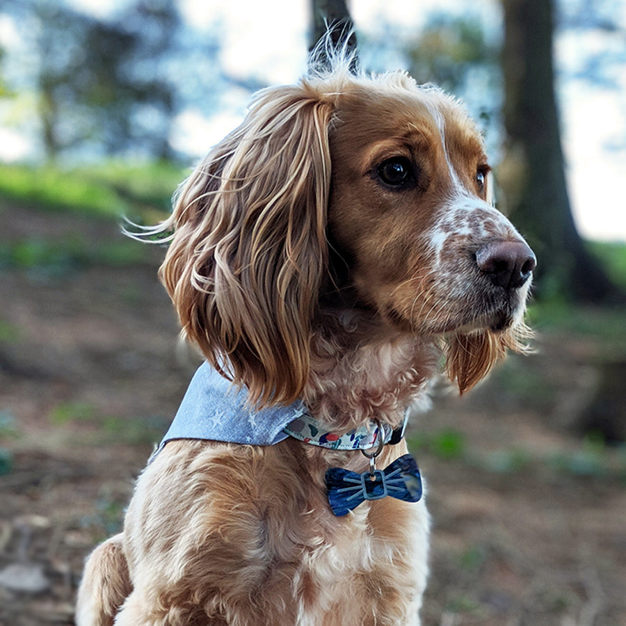 Dog model wearing a Galaxy BowDangle. A durable alternative to a dog bow tie