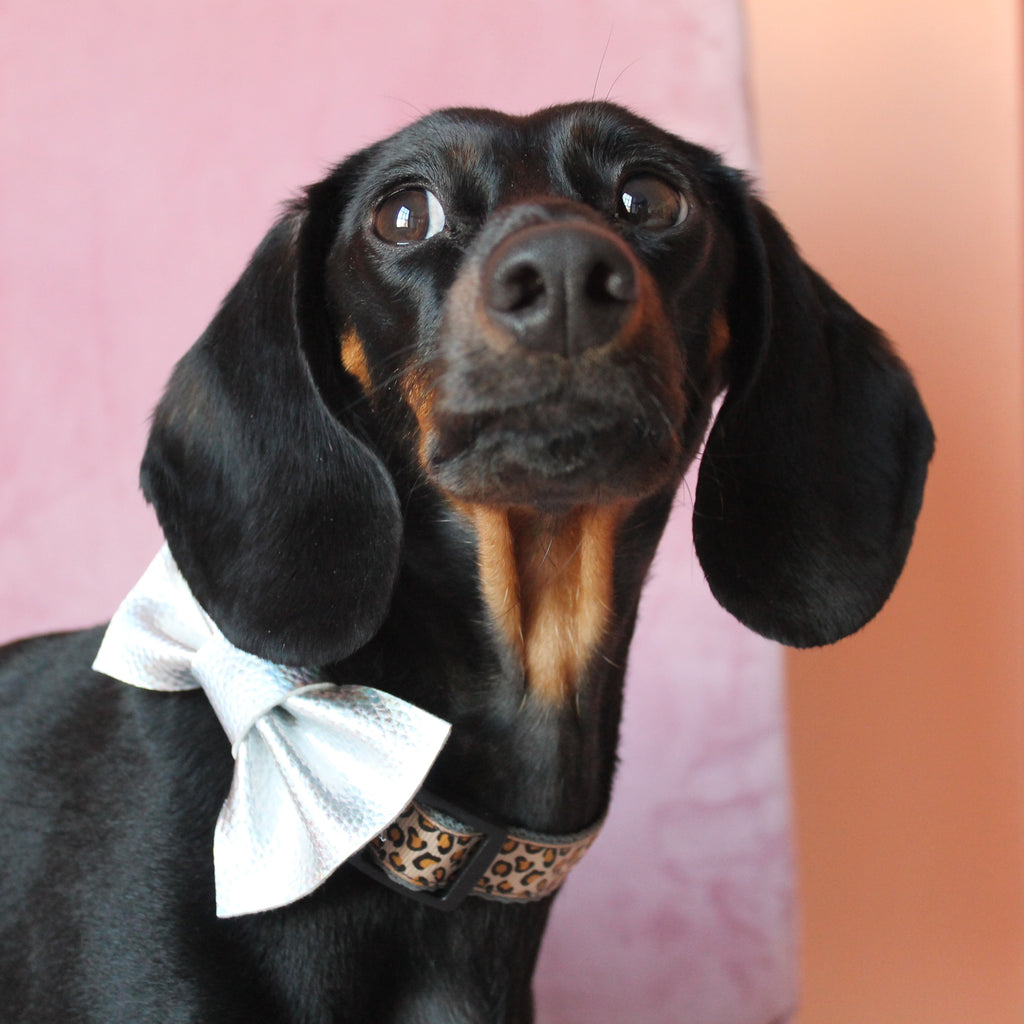 Wren & Rye - Holographic Silver Dog Bow Tie - Dog Shot