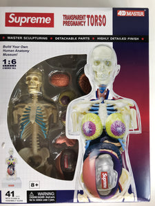 Supreme Transparent Torso (Anatomy Model)