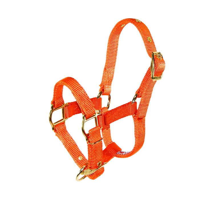 "3/4"" Miniature Deluxe Nylon Halters with Adjustable Chin Strap - Halter - Hamilton - Miracle Corp"