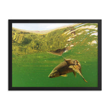 Load image into Gallery viewer, Framed poster - Brown trout swims