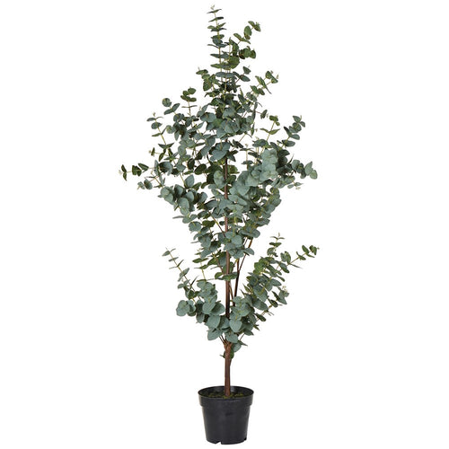 Green Eucalyptus Tree