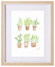Load image into Gallery viewer, Potted Succulents