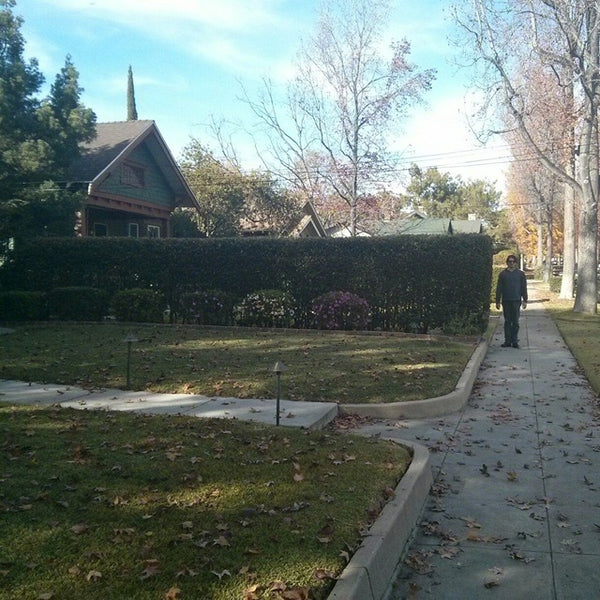 Hedge where the Halloween movie was filmed